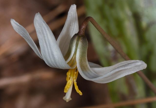 Find Plant Information